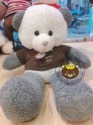 Gấu bông teddy xám áo len Super Star xanh (1m2)