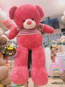 Gấu bông teddy hồng lông Thái áo len hồng (1m5)