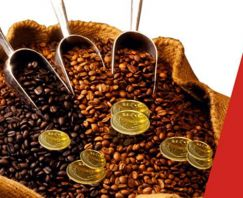 Vietnam Coffee Market Information