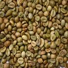 WET POLISHED ROBUSTA GREEN COFFEE BEANS GRADE 1 SCREEN 18