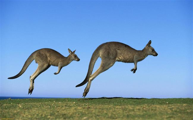 Melbourne - Dandenong - Sydney - Blue Mountain