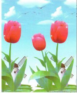 manh-cuon-in-tranh-2002