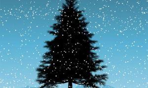 Những bí mật về cây thông Noel bạn chưa biết