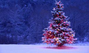 Sự tích của cây thông Noel