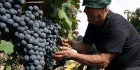 Những nước có nền công nghiệp sản xuất rượu vang nổi tiếng thế giới