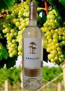 Rượu vang Arauco Sauvignon Blanc