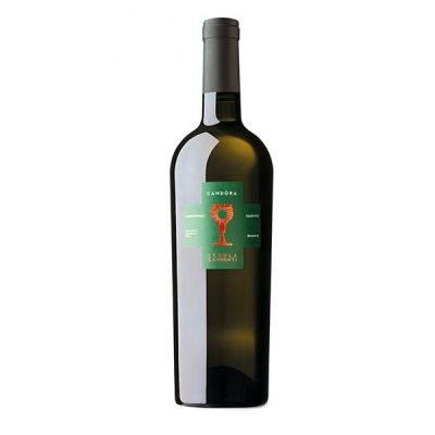 Rượu Vang Candora Chardonnay Schola Sarmenti