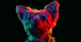 Chân dung đầy màu sắc của những chú chó lang thang được nhận nuôi