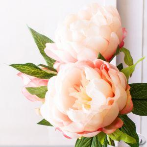 Hoa hồng cam hồng