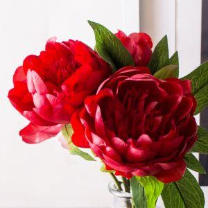 Hoa mẫu đơn hồng - trắng