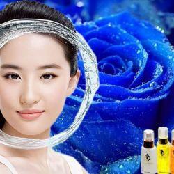 Hoa Hồng Xanh - Blue rose Oil