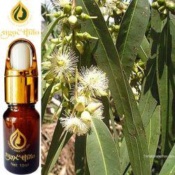 Tinh dầu Bạch đàn chanh - Eucalyptus citiriodora