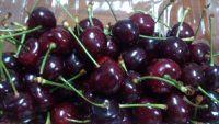 Cherry Chile thùng 3KG