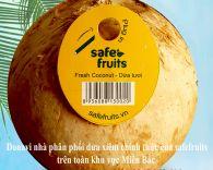 Trái dừa xiêm cao cấp size L