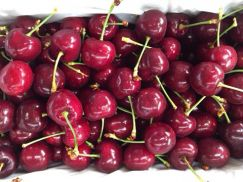 Cherry đỏ Australia