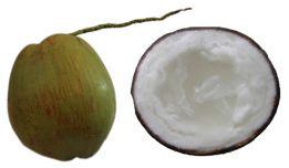 Dừa sáp