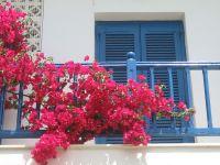 """12 loại hoa đẹp khiến ngôi nhà của bạn trở nên """"khác biệt"""""""