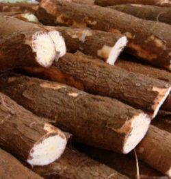 Hodacom Tapioca starch production