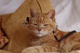Một số bệnh thường gặp ở mèo già