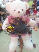 Gấu bông quần nút Thái (1m2)