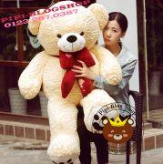 Gấu bông Teddy nơ Yiyaya (1m2, 1m4)