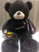 Gấu bông teddy socola quàng khăn cờ mỹ (90cm, 1m2, 1m4)