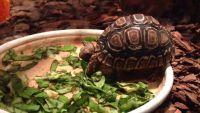 Chăm sóc rùa cảnh: Nên và không nên cho chúng ăn gì?