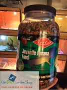 Các loại thức ăn không tốt cho Iguana