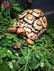 Chăm sóc rùa cảnh: Một số bệnh thường gặp ở rùa cảnh( phần 1)