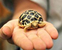 Chăm sóc rùa cảnh: Một số bệnh thường gặp ở rùa cảnh ( phần 2)