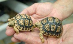 Chăm sóc rùa cảnh khi chúng ngủ đông