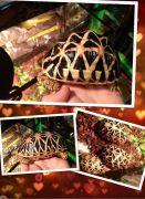 Chăm sóc rùa cảnh: Cách chữa bệnh thối mai cho rùa.