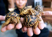 Hướng dẫn cách nuôi rùa cảnh tại nhà