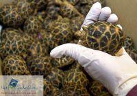 Dấu hiệu nhận biết thú cưng rùa đang bị bệnh