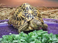 Hướng dẫn nuôi rùa cảnh cho người mới tập chơi