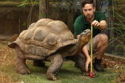 Cách nuôi rùa cảnh Sulcata Tortoise đúng cách
