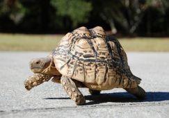 Tham khảo các loài rùa cảnh giá rẻ được nhiều người yêu thích