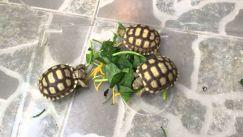 Ở đâu bán rùa cảnh giá rẻ khỏe mạnh và uy tín?