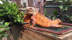 Shop thú cưng Việt Pet Garden đang được nhiều người biết đến