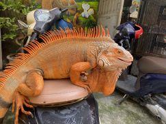 5 màu sắc Rồng Nam Mỹ được ưa chuộng nhất Tại Việt Pet