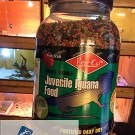 Đồ ăn khô Repcal for Juvenile Iguana
