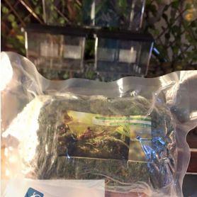Rêu khô chuyên dụng cho bò sát