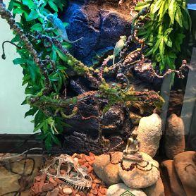 Bể nuôi Tắc kè hoa - Terrarium For Chameleon
