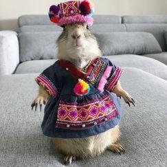 Sóc Bắc Mỹ – Prairie Dog