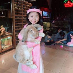 Thỏ Tai Cụp Pháp – French Lop Rabbit