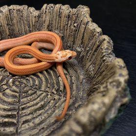 Hypo Striped Corn Snake