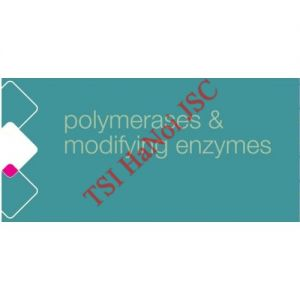 T4 DNA Polymerase