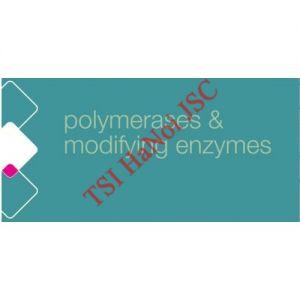 Enzyme cắt nối T4 DNA Polymerase
