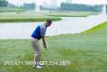 Kỹ thuật học đánh golf cơ bản dành cho người mới tập