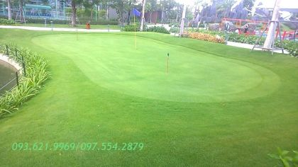 CỎ PASPALUM MINI GOLF